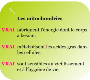 Test de vitalité cellulaire pour évaluer vos mitochondries